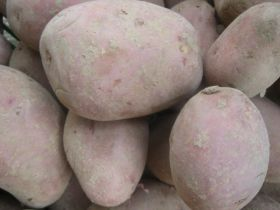 Kartoffel Rosara